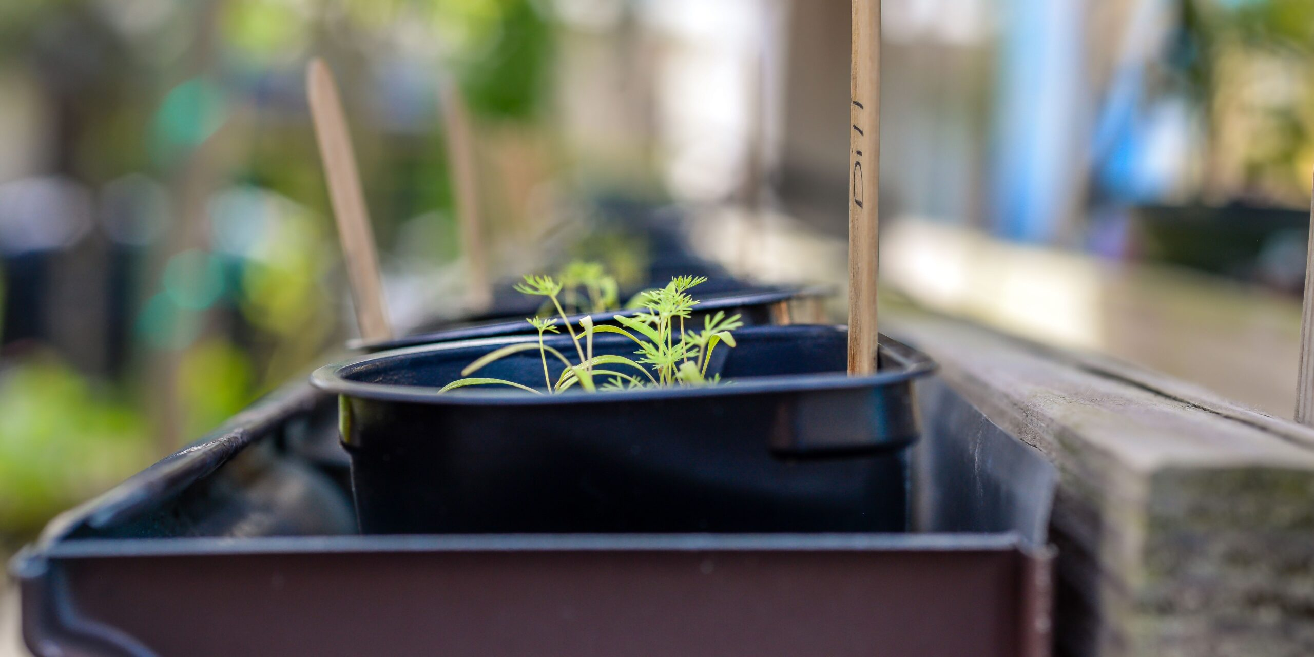 why growing your own food is important